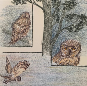 colored-pencil-drawing-of-three-great-horned-owls