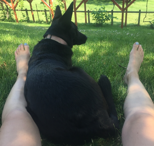 black dog with pointy ears laying in grass between person's outstretched bare legs