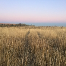 tall, yellow grass with overgrown tire tracks and pink sunset