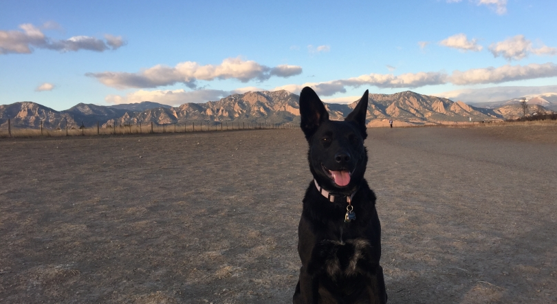 black-dog-with-pointy-ears-sitting-near-mountains