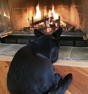 Stella fire