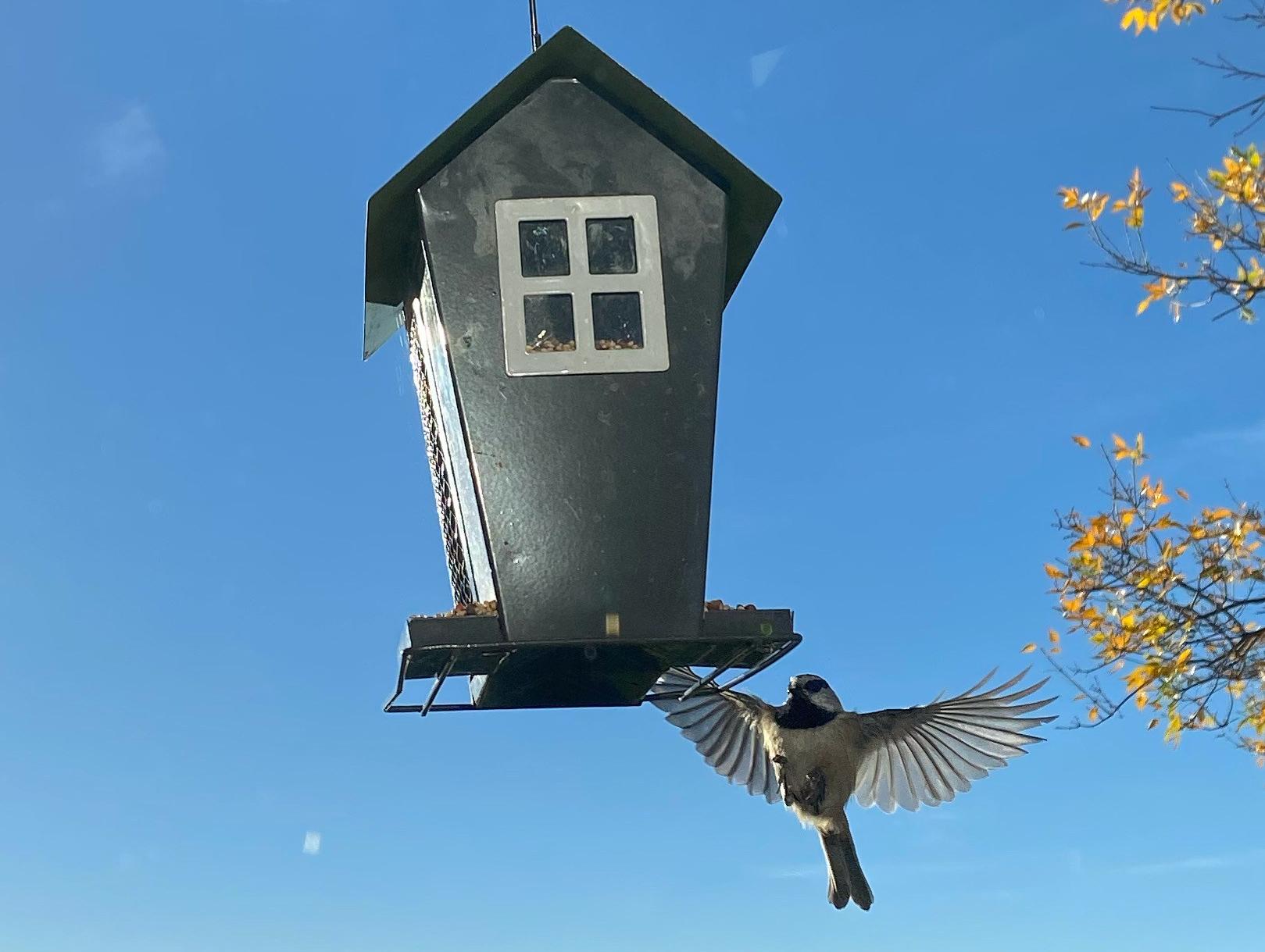 chickadee-landing-on-house-shaped-bird-feeder