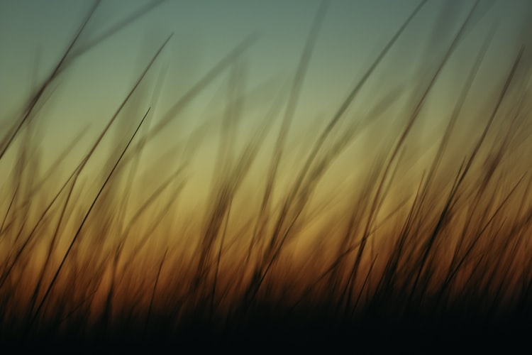 blurry-photo-of-grass-from-ground-level-with-gradient-of-light-in-background-from-sunset