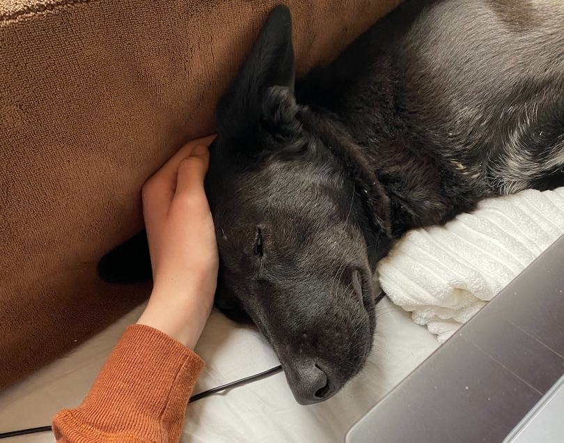 left-hand-on-head-of-sleeping-black-dog-with-pointy-ears